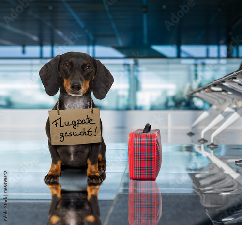 Foto op Canvas Crazy dog dog in airport terminal on vacation ready for transport in a box