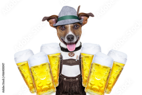 Foto op Aluminium Crazy dog bavarian beer dog
