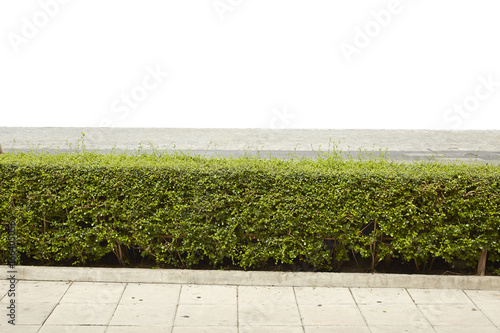Foto op Plexiglas Wand green bush isolated