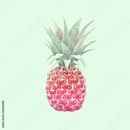 Watercolor vector pineapple fruit - 166438489