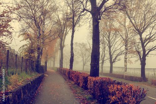 Beautiful autumn park, landscape, path in the fog