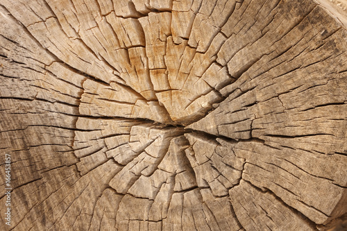 Pine Tree Wood Grain with Cracks - 166453857