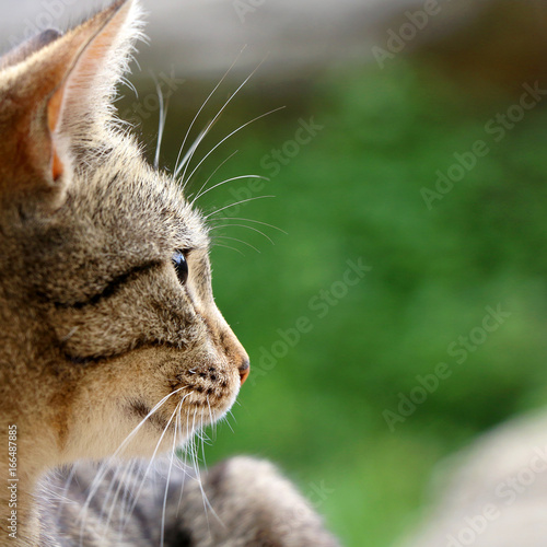 Brown tabby cat in the garden. Head close-up, selective focus.
