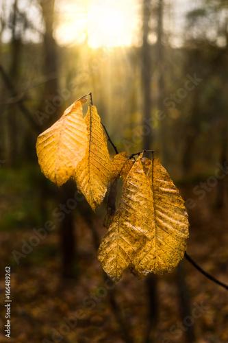 Landschaft Herbstsonne scheint auf letze Blätter im Wald - Landscape autumn sun shining on last leaves in the forest