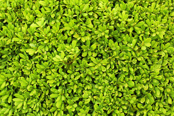 Tropical bush with green leaves as background