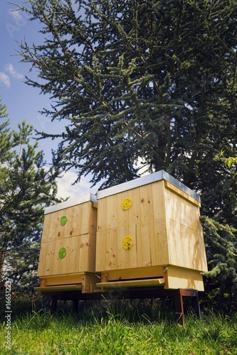 Foto op Aluminium Bee Bees flying into wooden hive on a sunny day