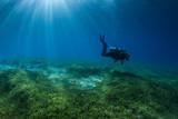 Scuba Diver na trawie morskiej