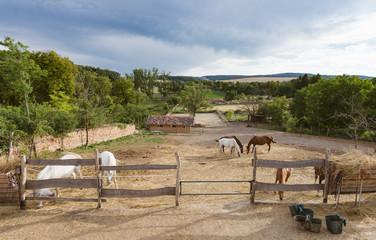 Animal farm, horses grazing