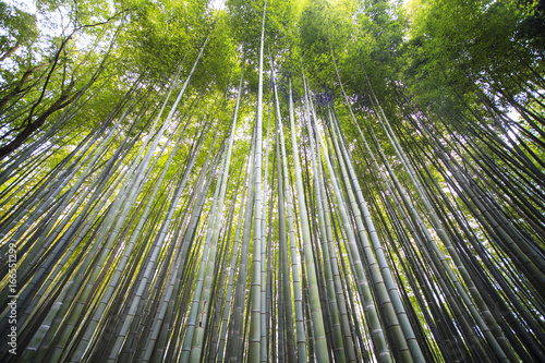 beautiful Arashiyama Bamboo forest in Kyoto, Japan