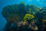 Beautiful corals underwater on blue marine background
