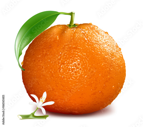 Orange with blossom and leaves. Vector illustration.
