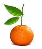 Fresh tangerine with green leave. Vector illustration.
