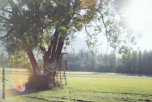 Foto op Canvas Grijs Hunters hut in summer landscape