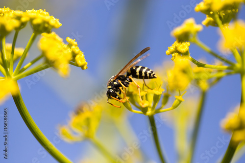 Wasp on yellow flower in nature