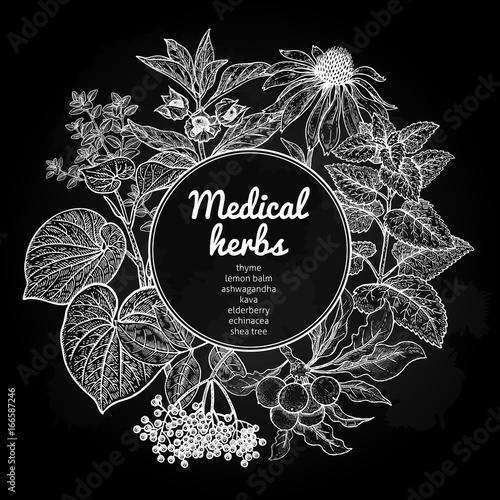 Medical herbs and plants. Black and white card.
