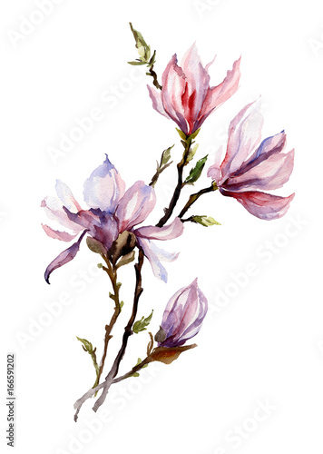 Fototapeta Pink magnolia flowers on a twig. Isolated on white background. Watercolor painting. Hand drawn. Vertical orientation.