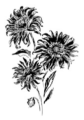 Vector illustration with black flowers on white background