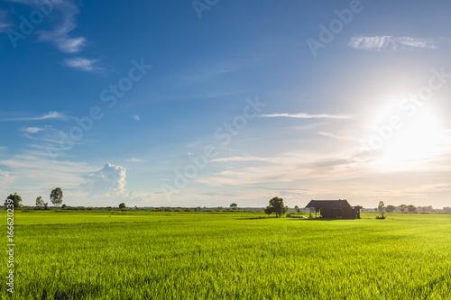 Foto op Canvas Bleke violet Green Field Blue Sky