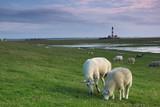 Westerhever Leuchtturm und Schafe - 166622077