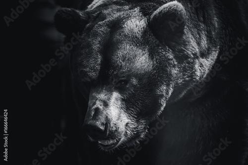 Spoed canvasdoek 2cm dik Panter bear