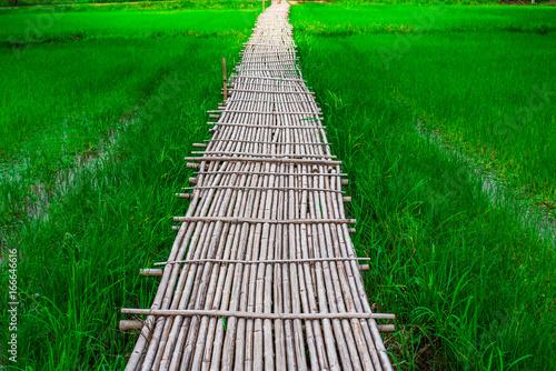 Fotobehang Groene Bamboo bridge (Phukareang) crossing rice field at NakhonNayok