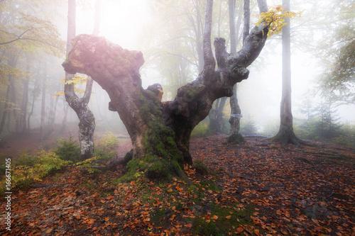 Autumn foggy sunny forest