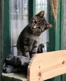 Mały kot cute tygrys wygląda bardzo słodko