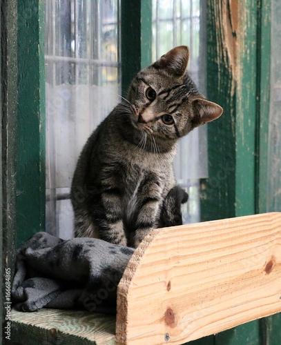 kleine süße tiger katze guckt sehr süß