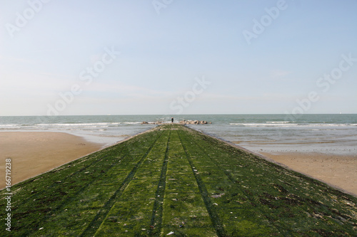 Der grüne Weg ins Meer