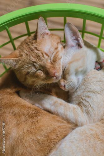 Cat hugging in the basket