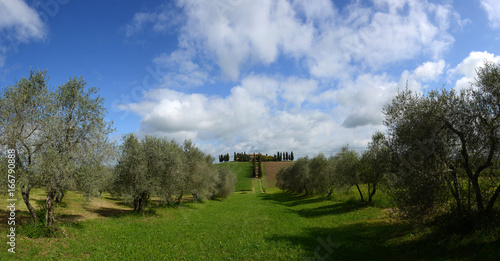 Tuinposter Toscane Landgut aus Gladiator Toskana mit Zypressen und Olivenbäumen