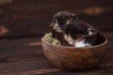 kotki w misce