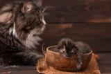 duży i mały kot