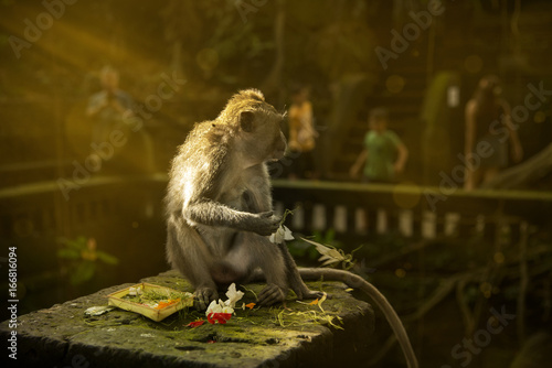 Aluminium Aap Monkey plays with gift to the god.