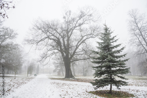 Park in december after first snow in fog