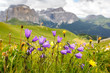 Quadro Flowers on meadows above Val di Fassa valley, Dolomites, Italy