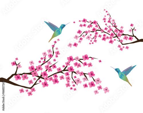 Fototapeta Cherry Blossom with Hummingbirds
