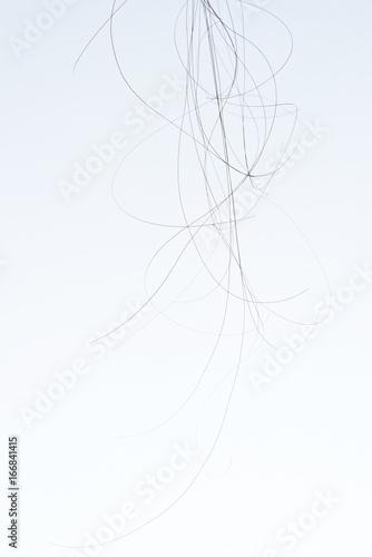 Foto op Aluminium Kapsalon Curly dark hair strands