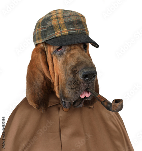 Bloodhound dog with a pipe Poster