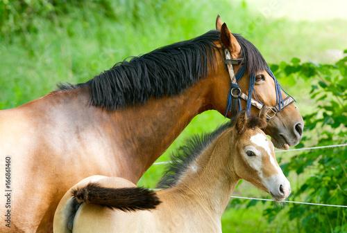 Horses in Sweden Poster