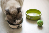 Fototapety Dry cat food in a green porcelain bowl on a gray wooden floor