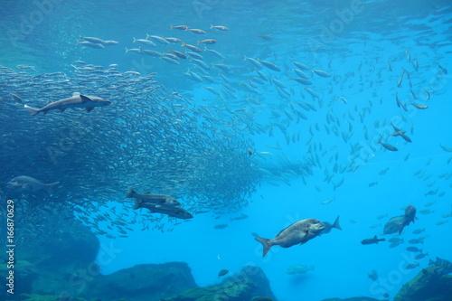 Aluminium Blauw 涼イメージ(水族館)