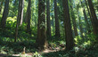 Hiking the giant redwood forest
