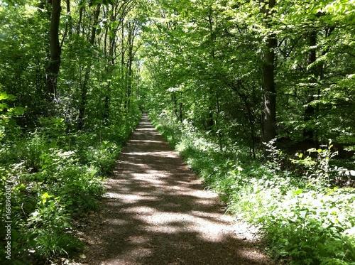 Foto op Canvas Weg in bos Licht und Schatten