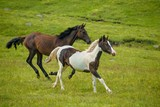 horses - 166915226