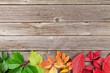 Autumn wooden background - 166917845