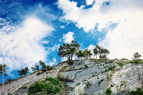 Pine trees grow on rocks against the sky