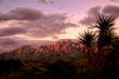 Organ Mountains Sunset