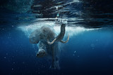 Swimming African Elephant Underwater. Big elephant in ocean with air bubbles and reflections on water surface. - 166940290