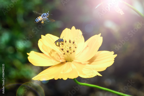 Foto op Aluminium Bee flying bee find for sweet with light flare